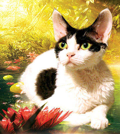 описание породы кошек девон рекс