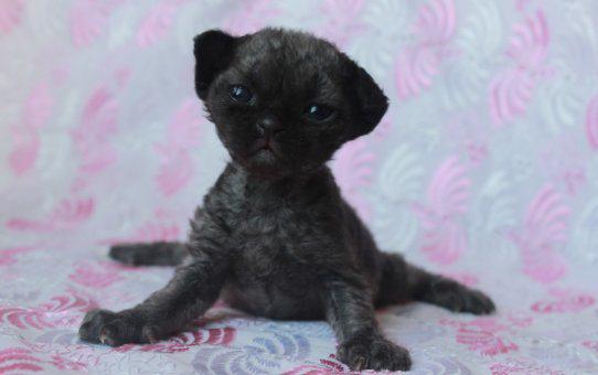 В питомнике родились котята!