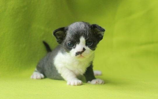 Новая статья на сайте будет полезна тем, кто хочет купить котенка!